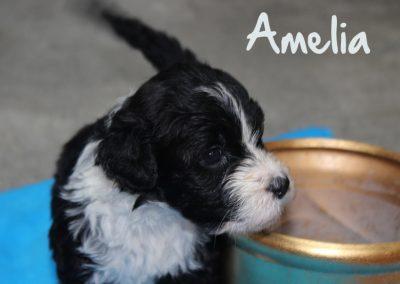 amelia 2